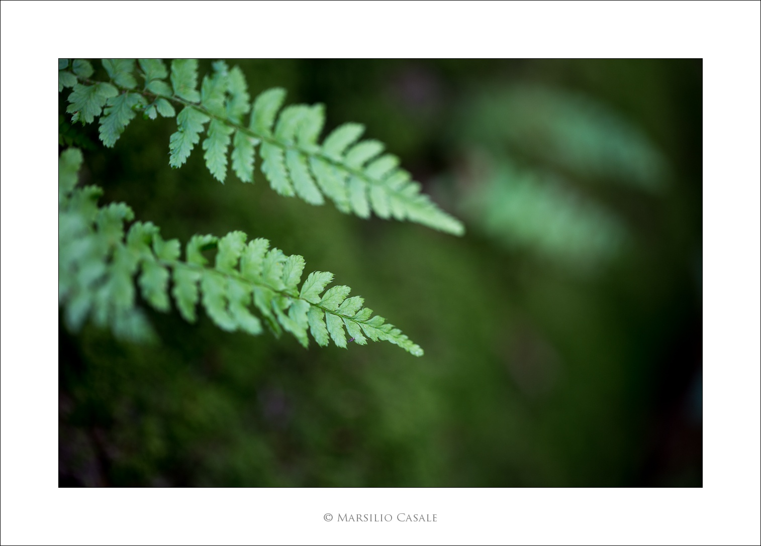 Green by Marsilio Casale