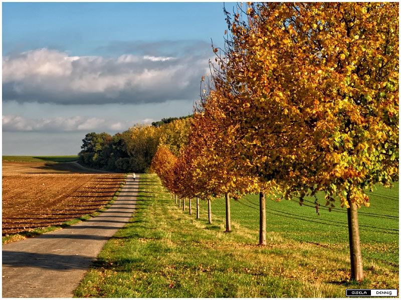 Herbst by Gisje D.