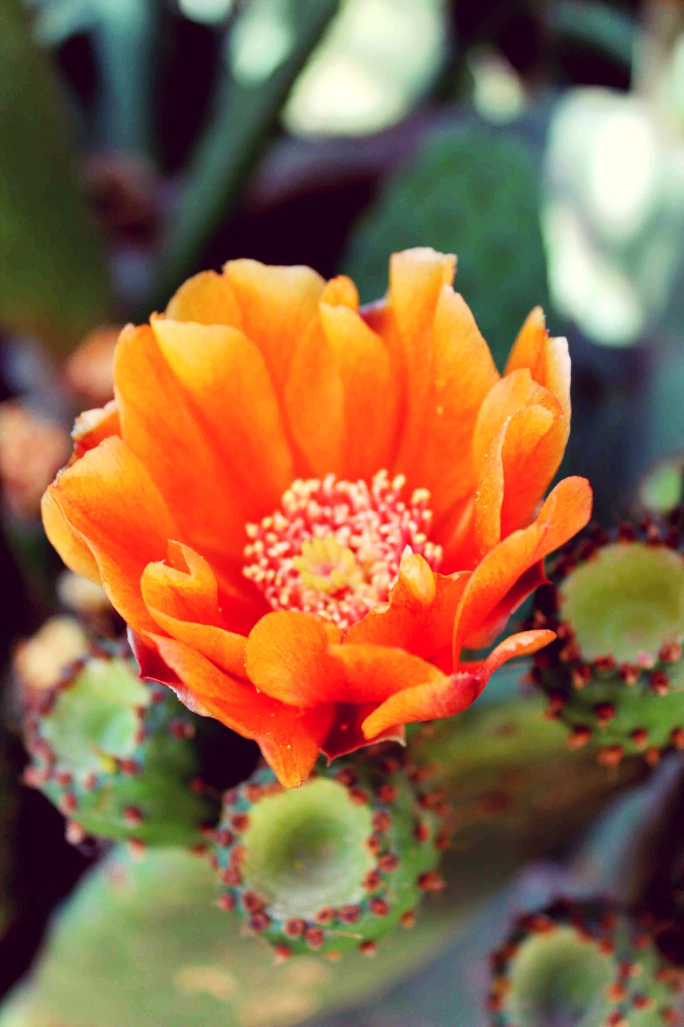 Cactus Flower by Ana
