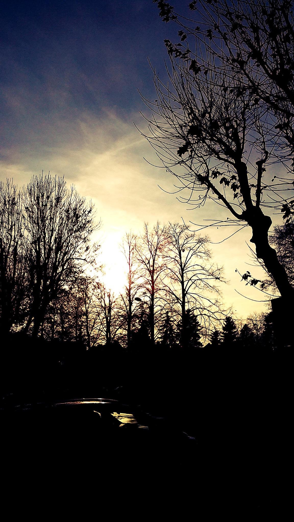Forest by ogiegloart