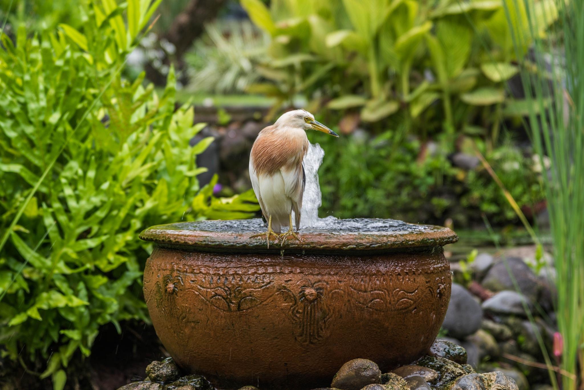 Bird's bath by Vadim Chepegin