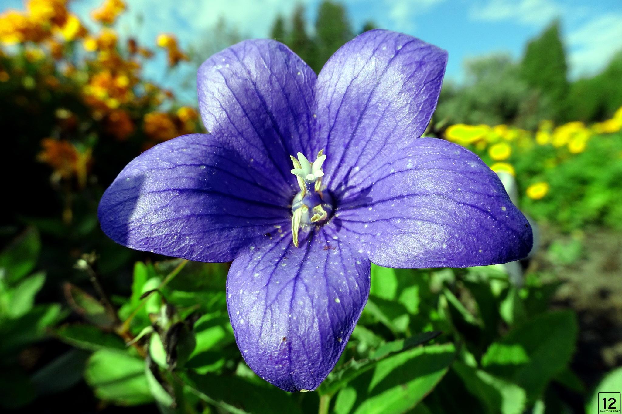 close up violet flower by twelvephotography