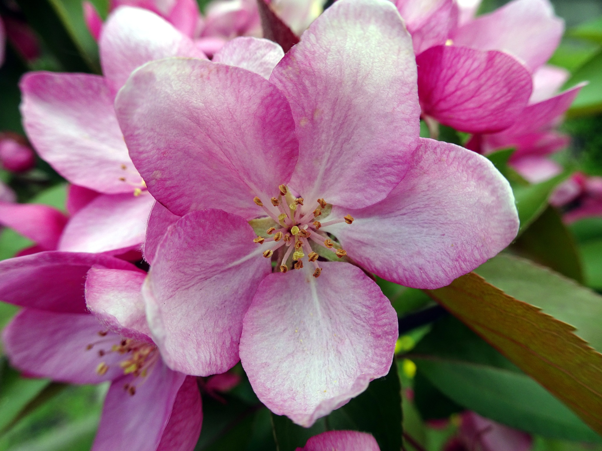 Beauty flower by twelvephotography