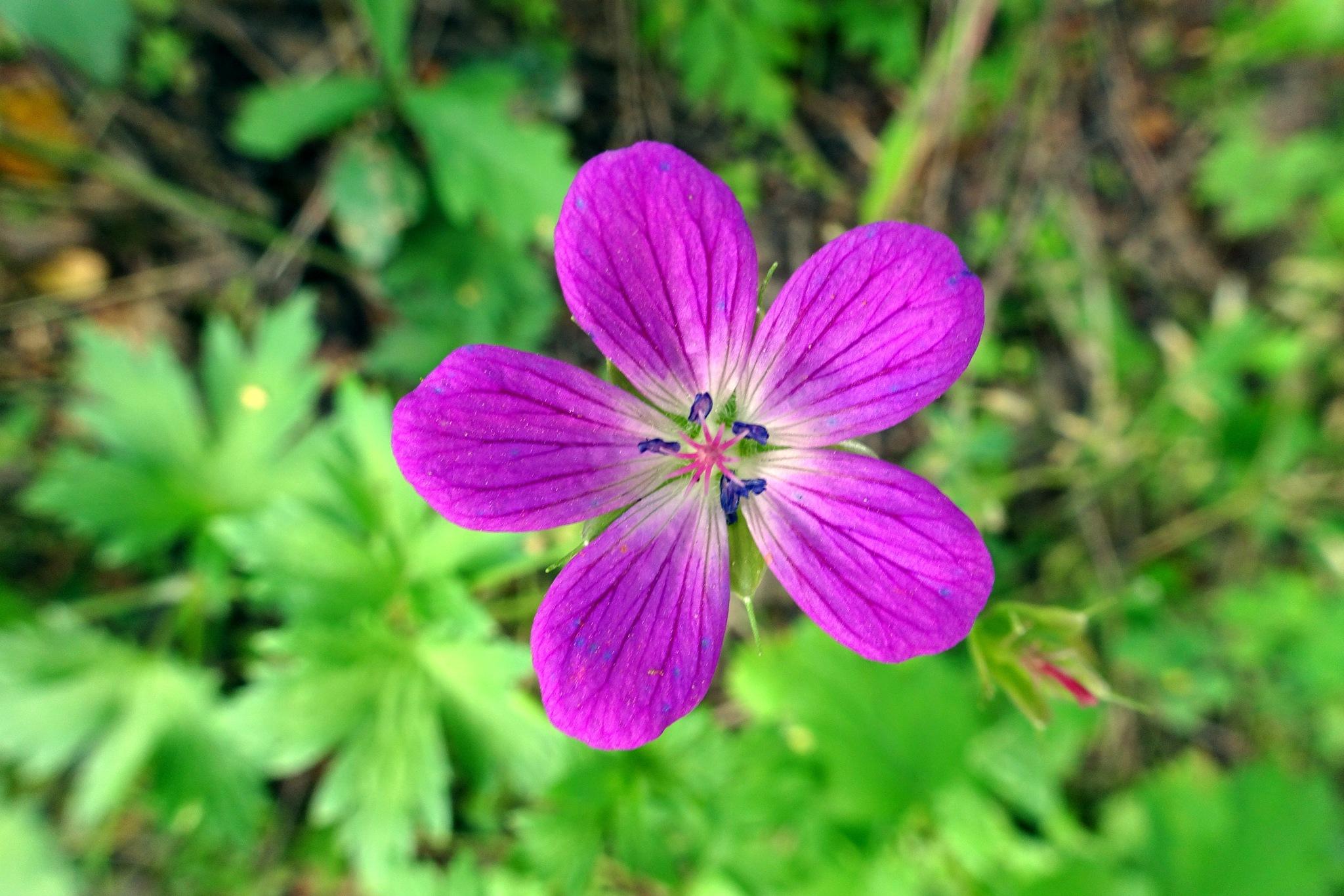 Flower by twelvephotography