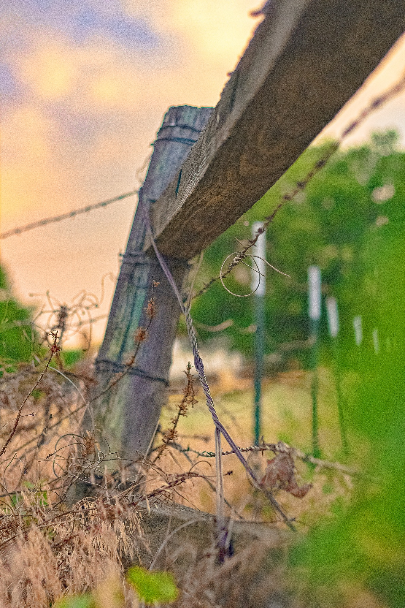 Fencepost and Barbed Wire by Marcellus Suber