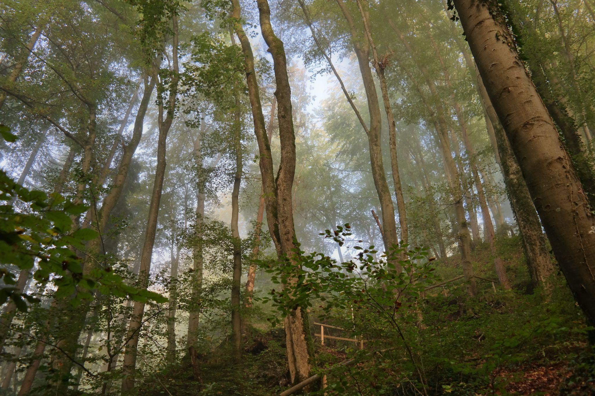 Trees by Hotel Buchenhain Photography