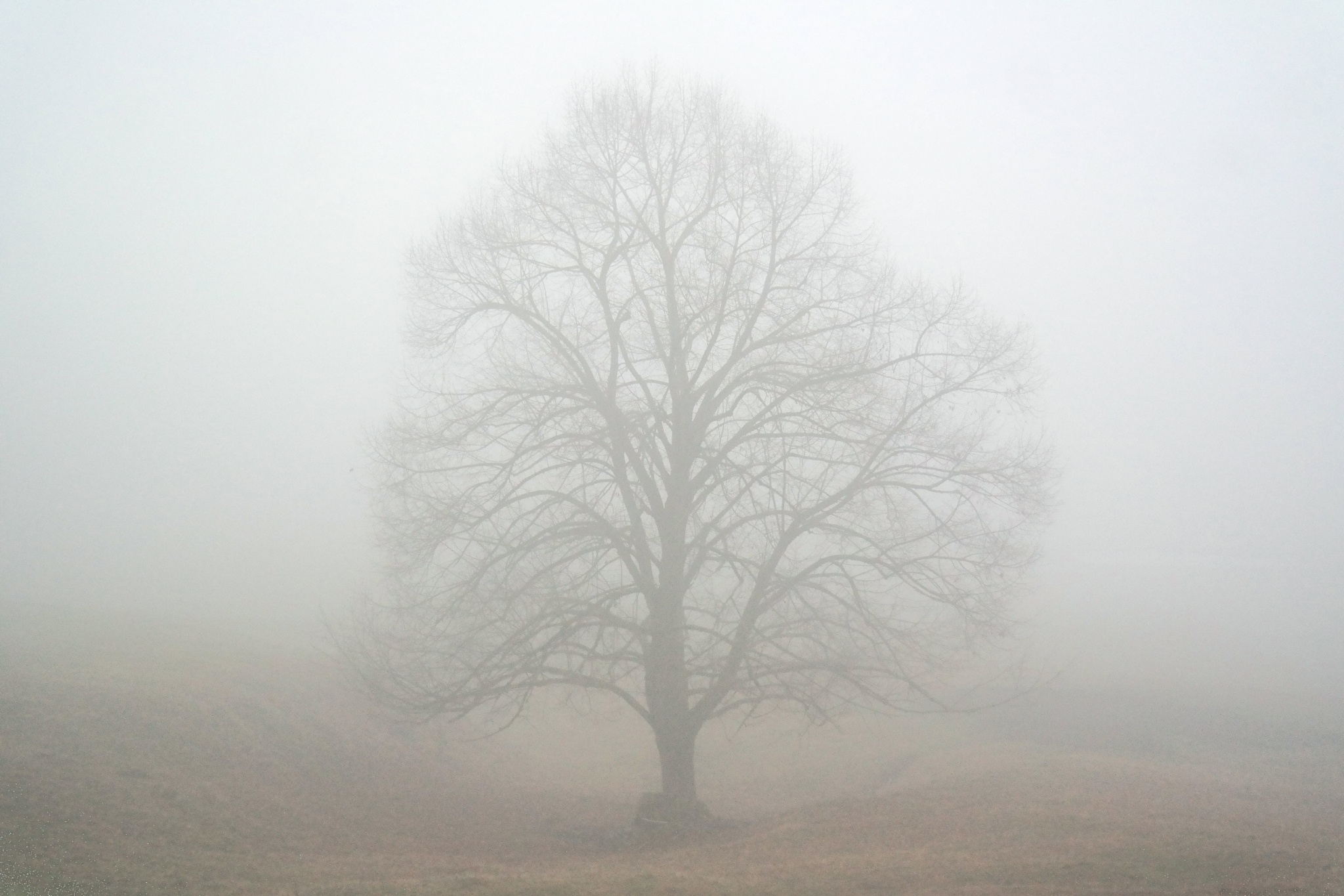 Misty by Hotel Buchenhain Photography