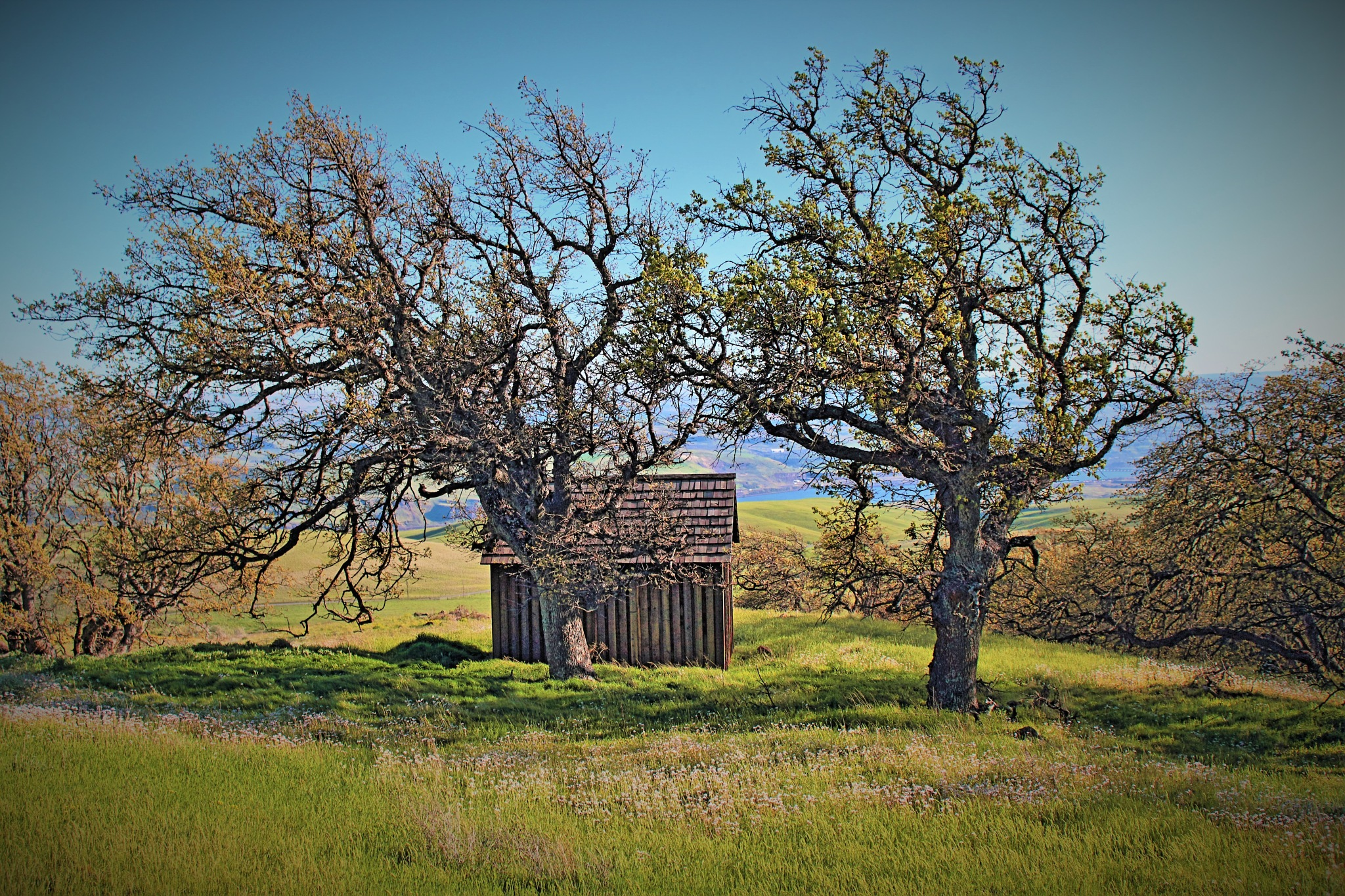 Dalles Mt. Ranch by Kevin7