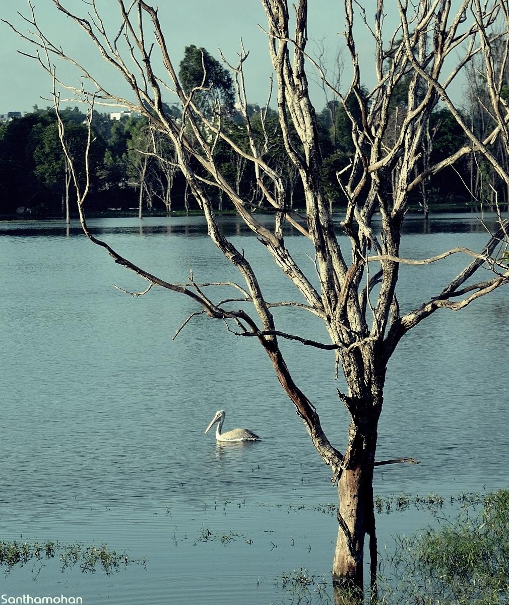 Lake View by Santhamohan