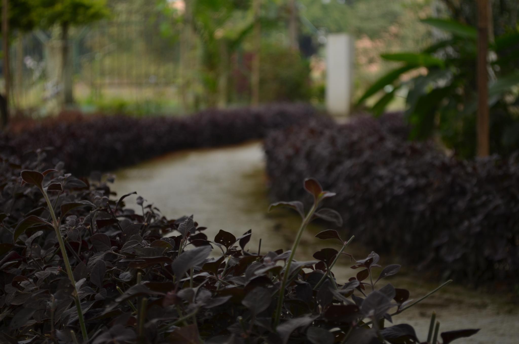 The path by umakanta