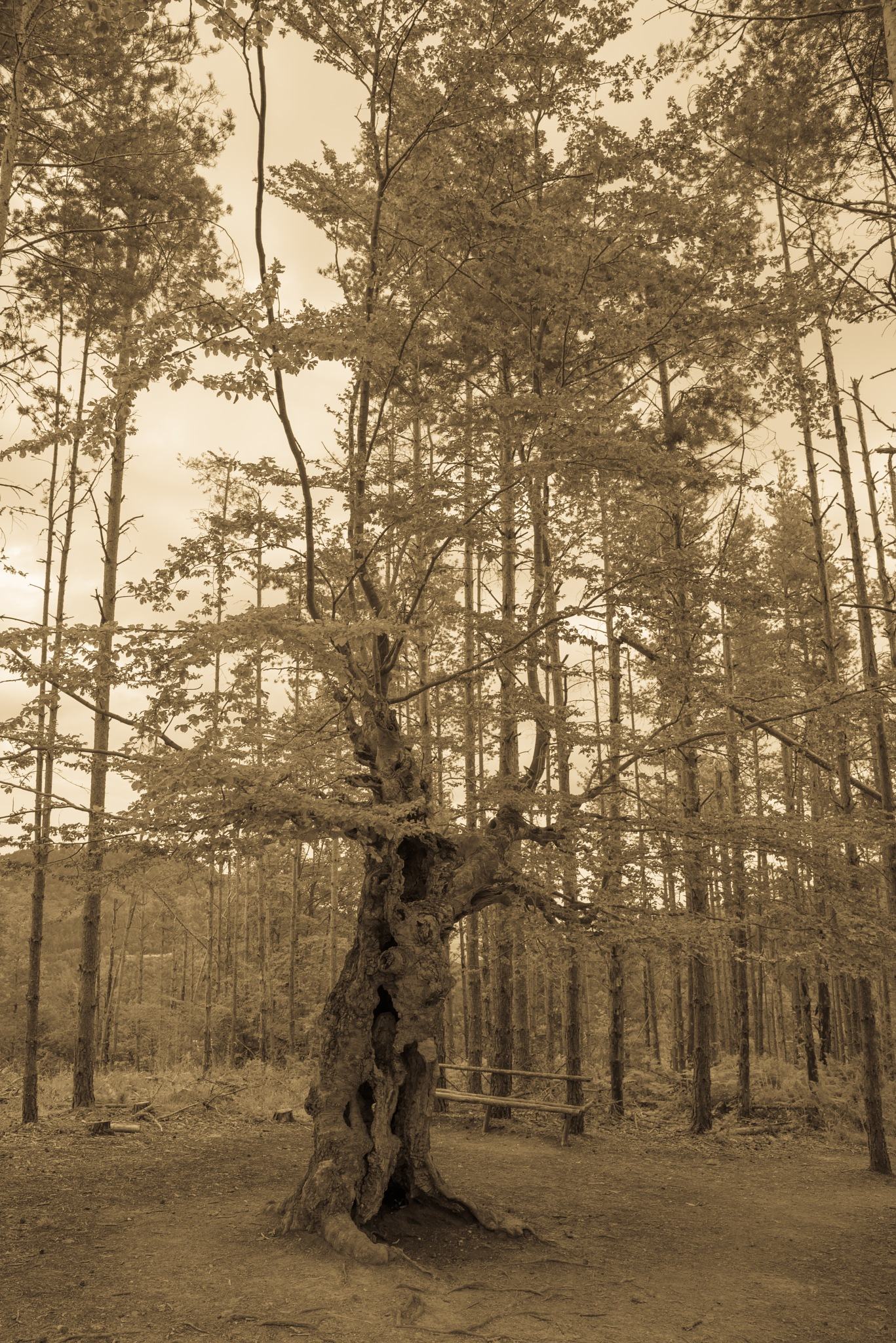 The Old Tree by a100