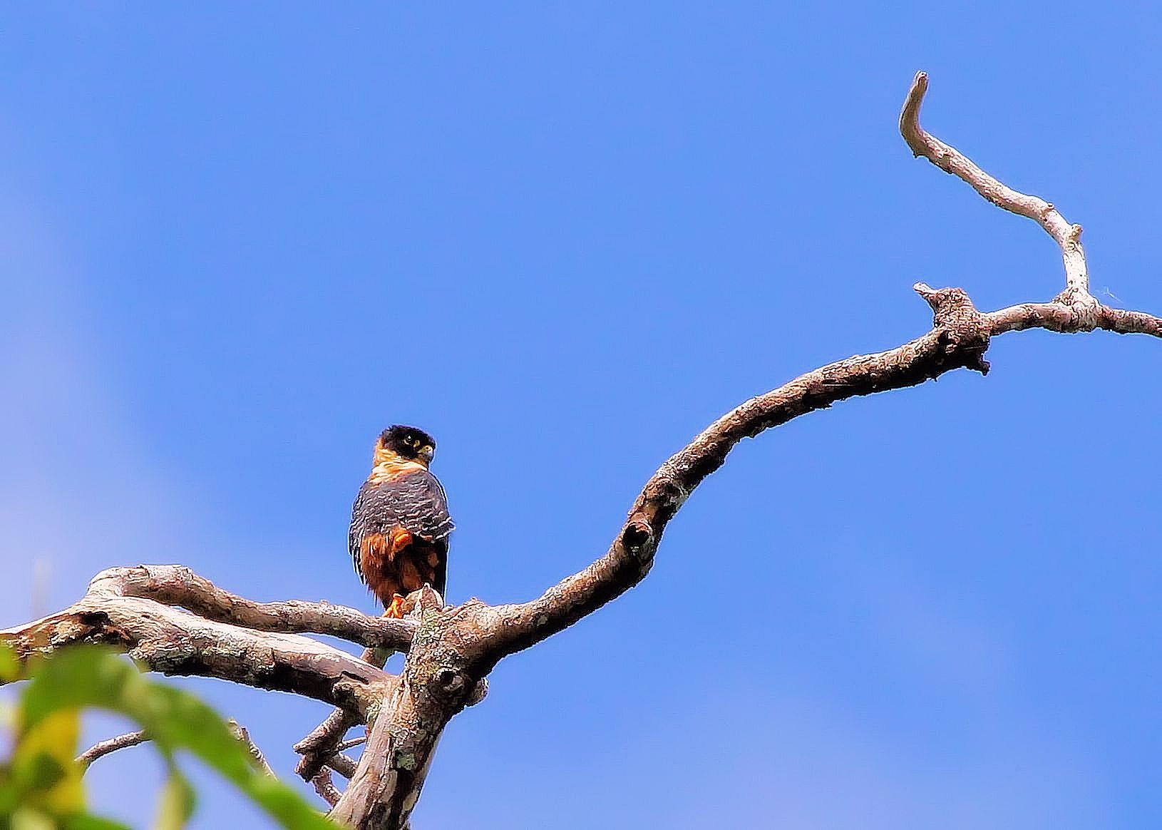 Birds of Suriname by willyramaekers