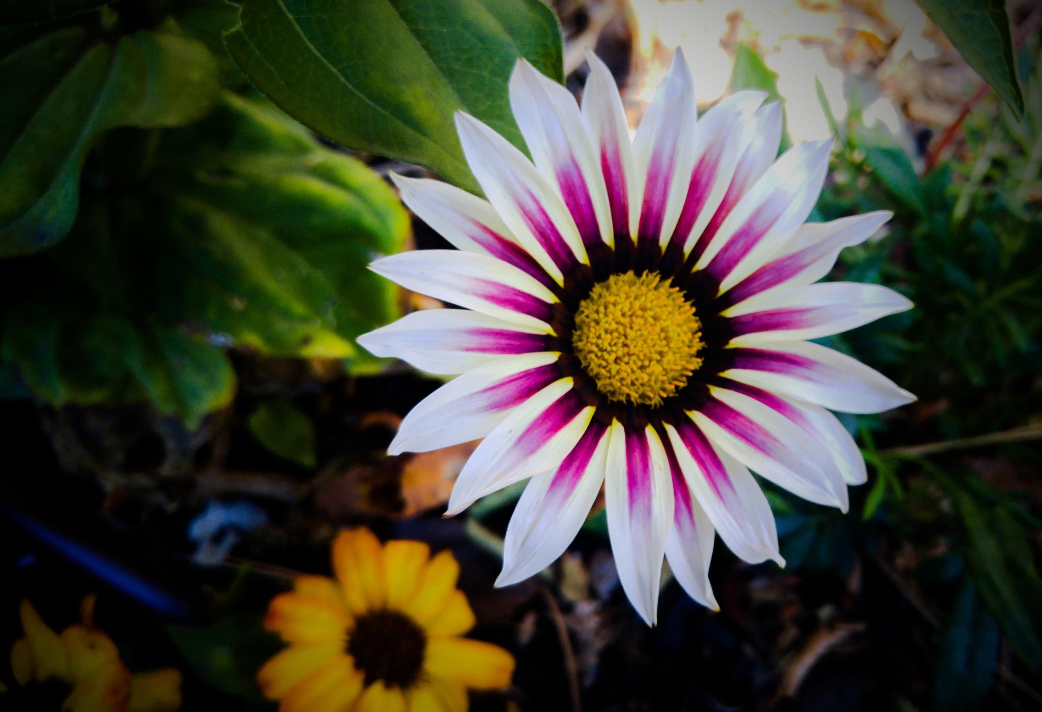 Flower by Troy Haddad