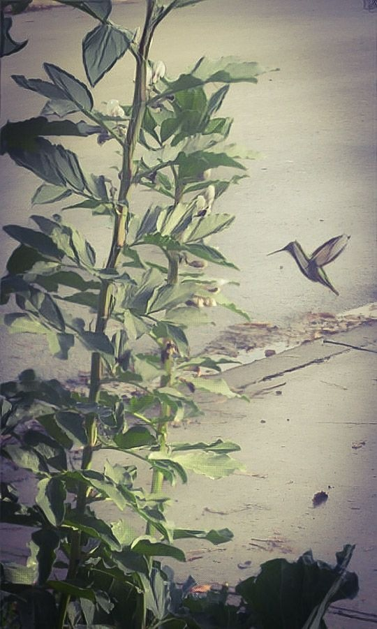 Hummingbird by Troy Haddad