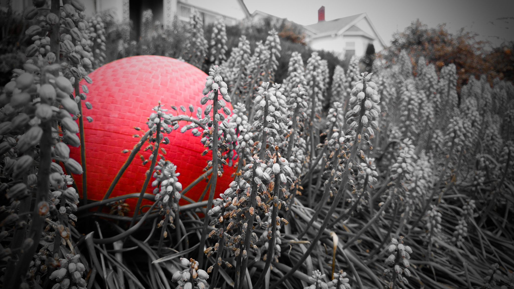 Red ball by Troy Haddad