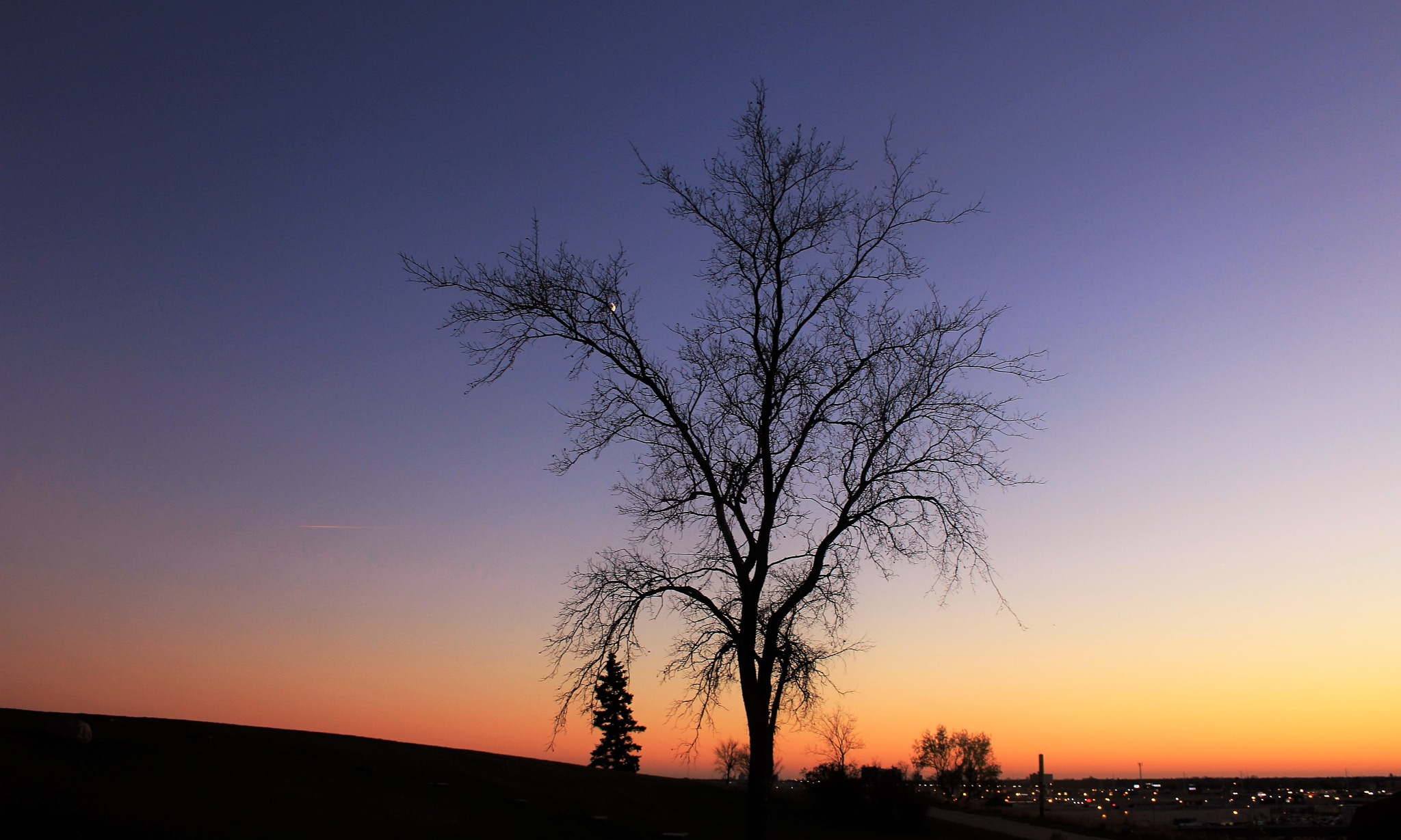 Bare Tree Against the Sky by David Imrie