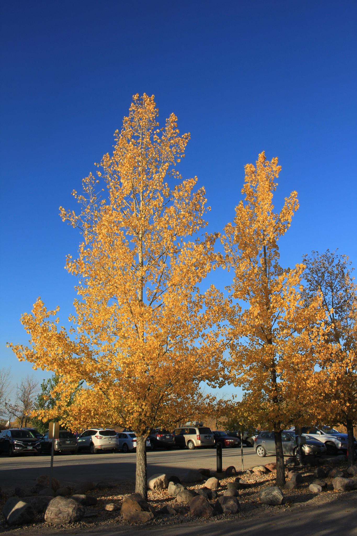 Autumn Colour by David Imrie