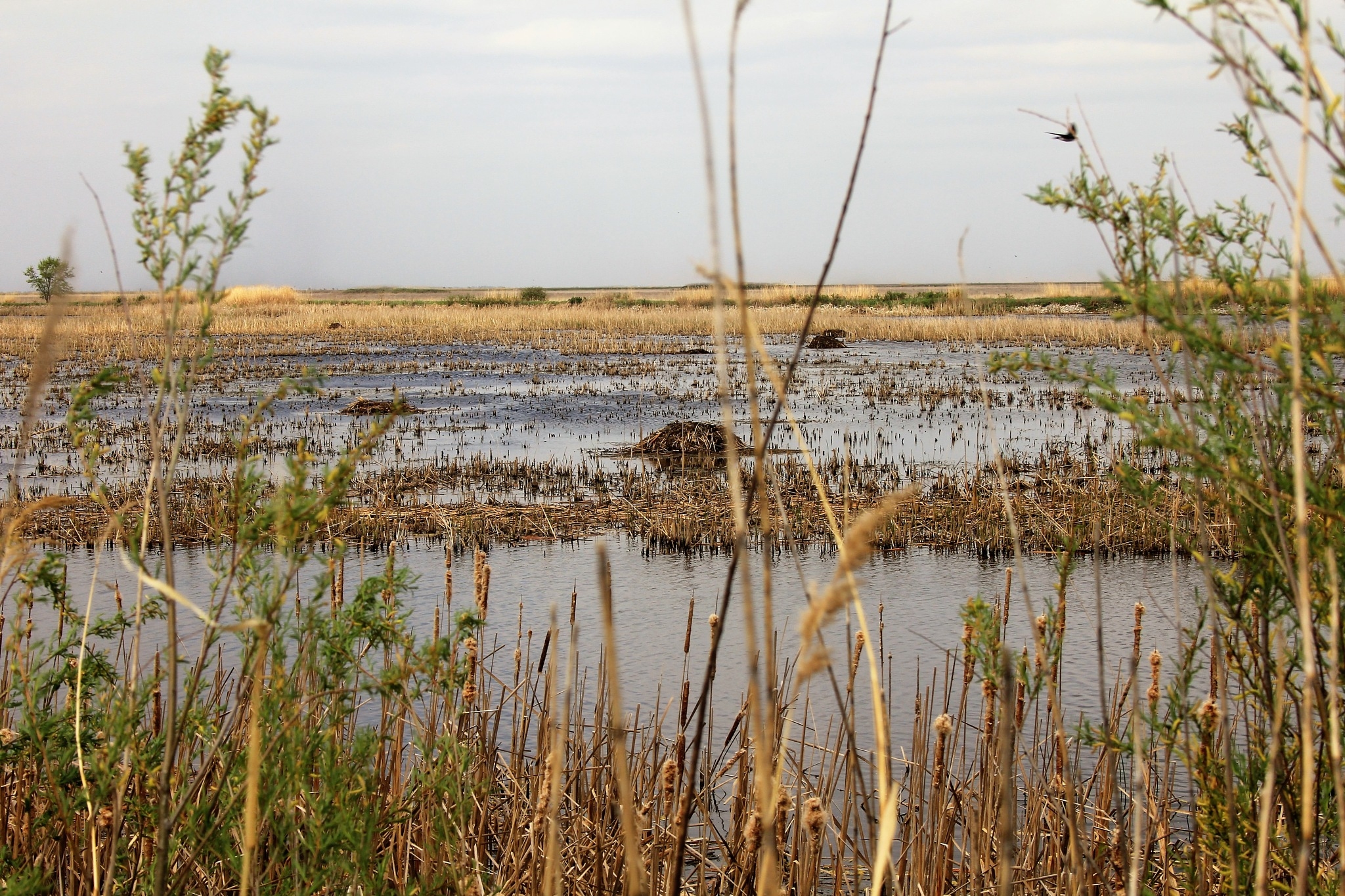 Wetland and Beaver Lodge  by David Imrie