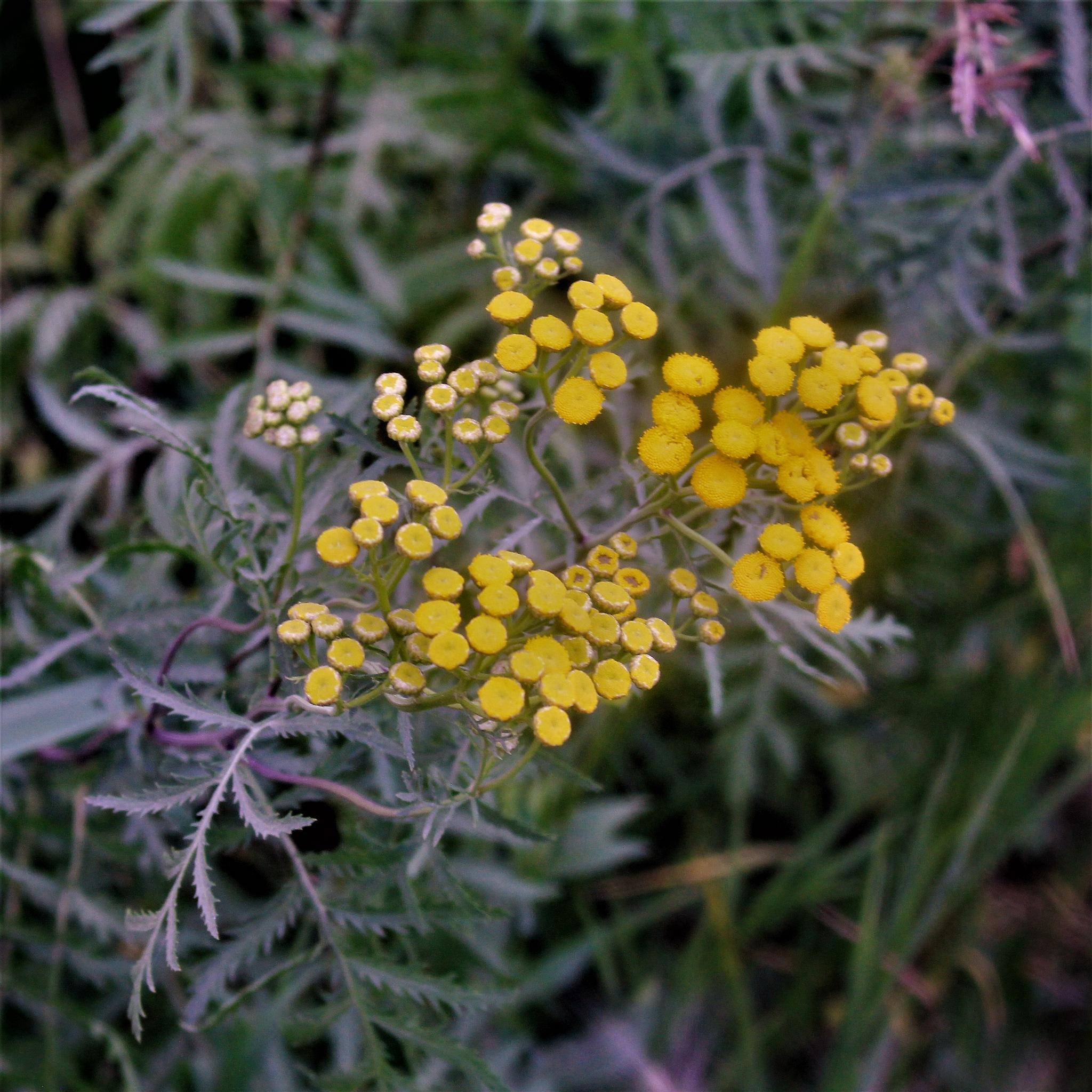 Wildflowers by David Imrie