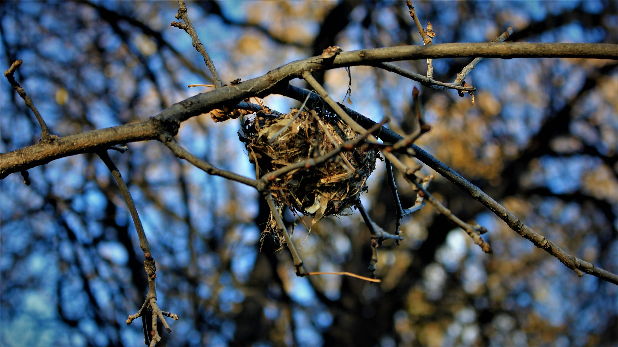 Abandoned Bird Nest  by David Imrie