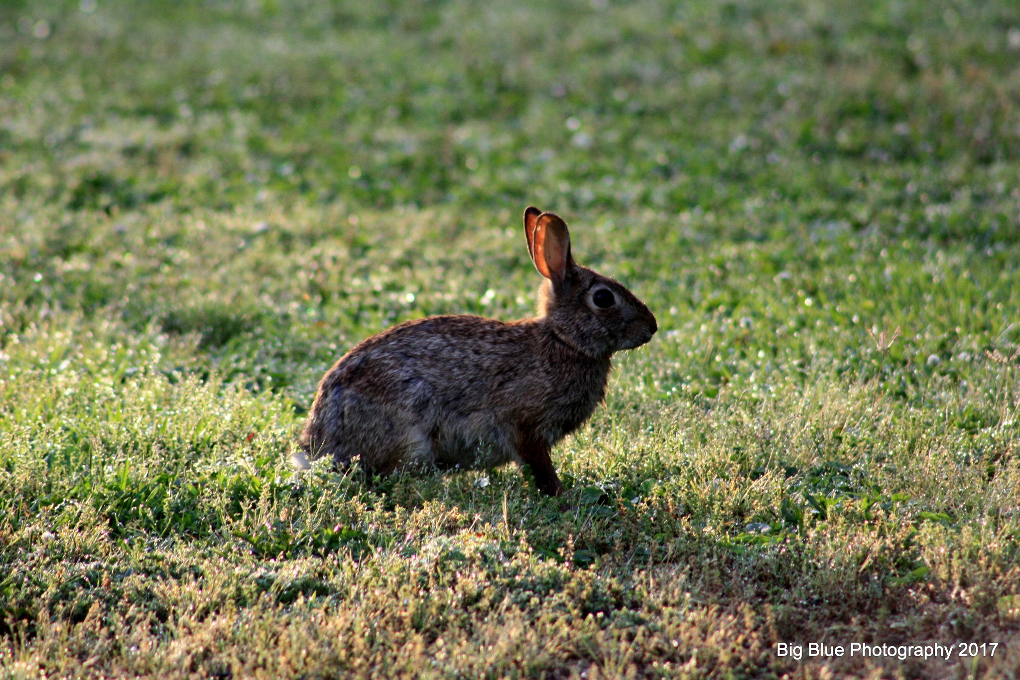Wild Hare by Sierra St Francis Photography