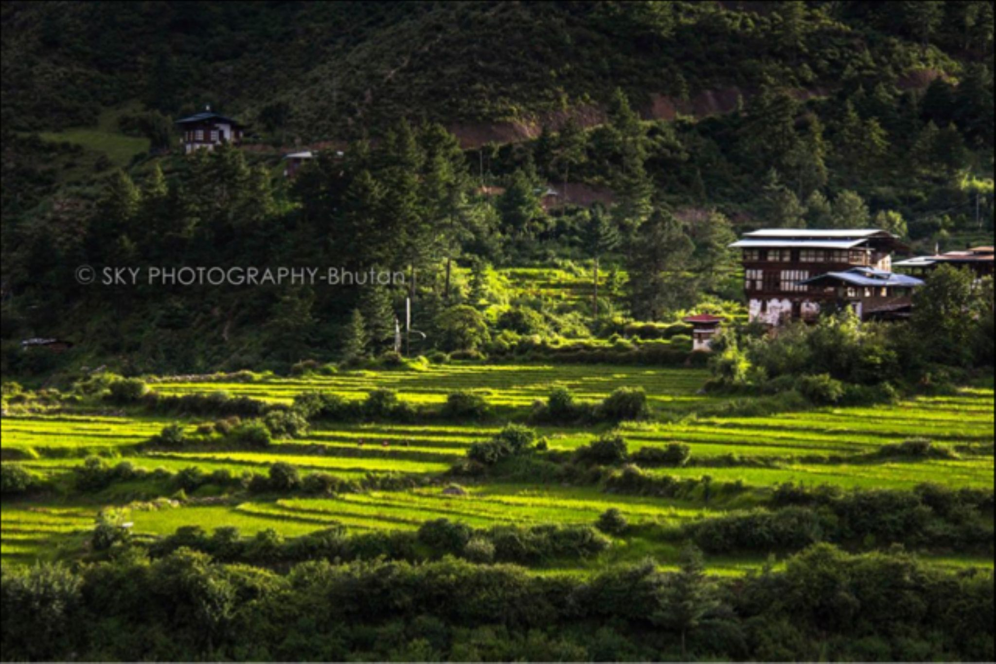 IMG_4118 by Kencho Wangdi