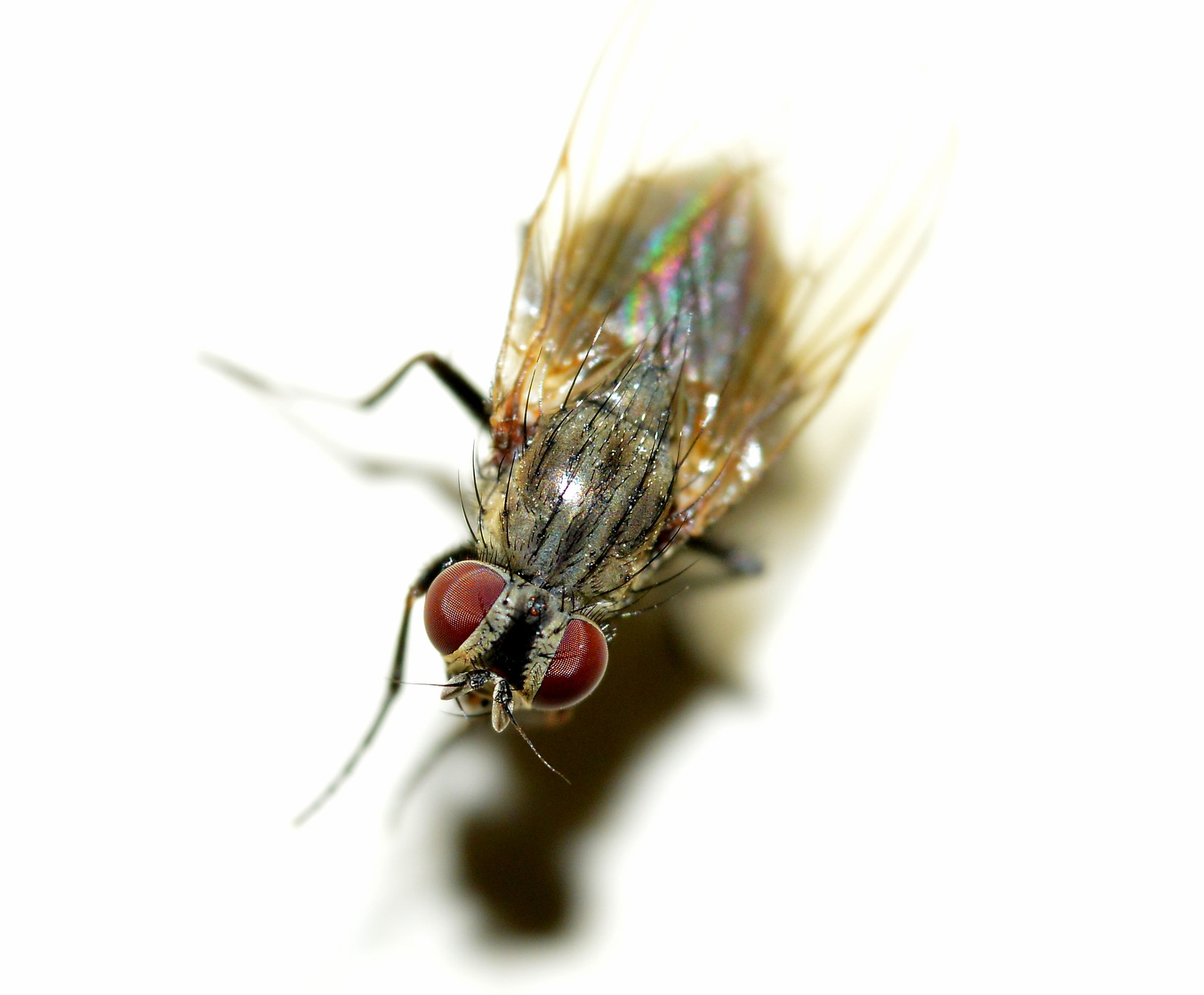 The fly!! by lynncam26