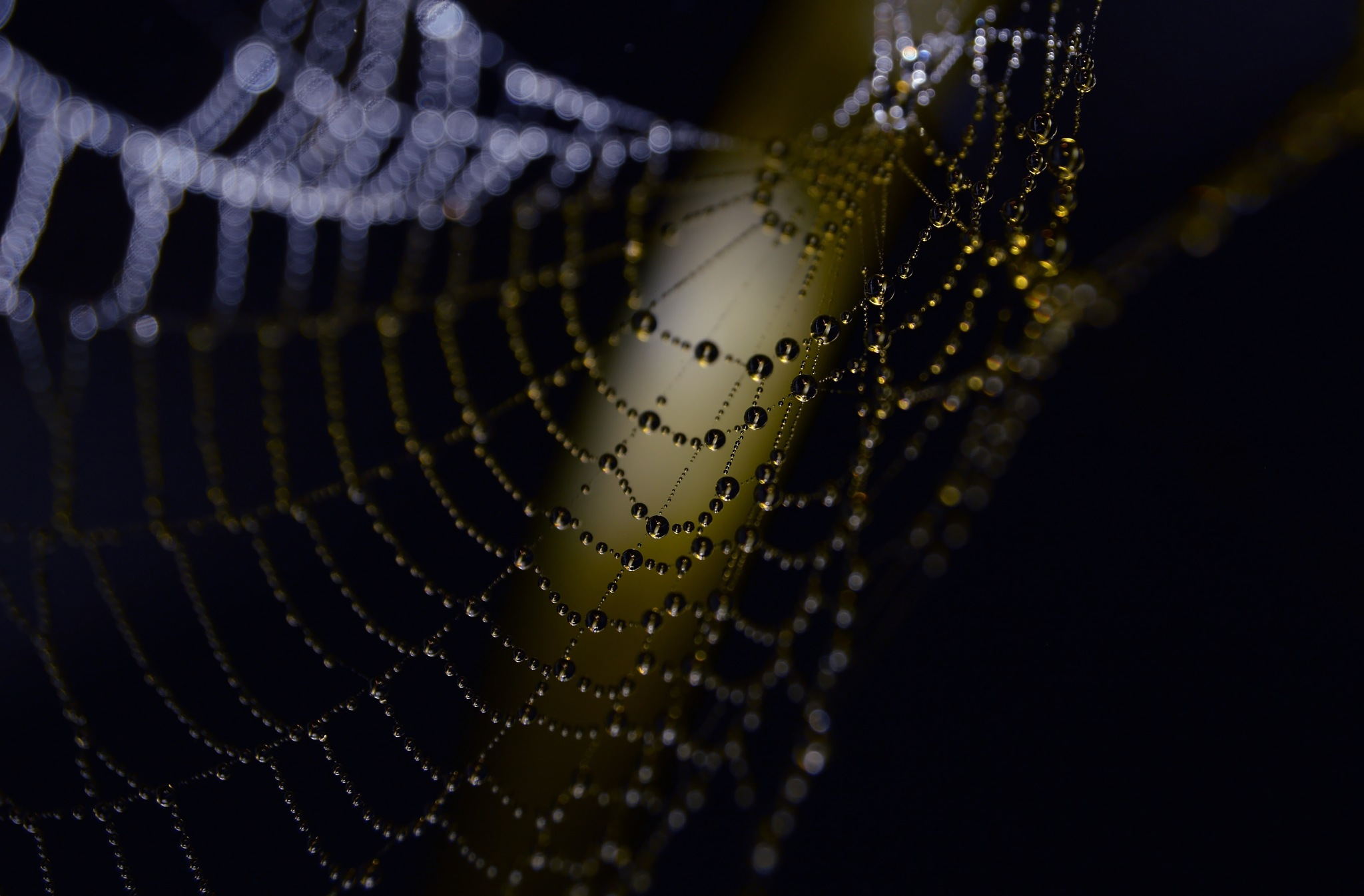 waterweb by lynncam26