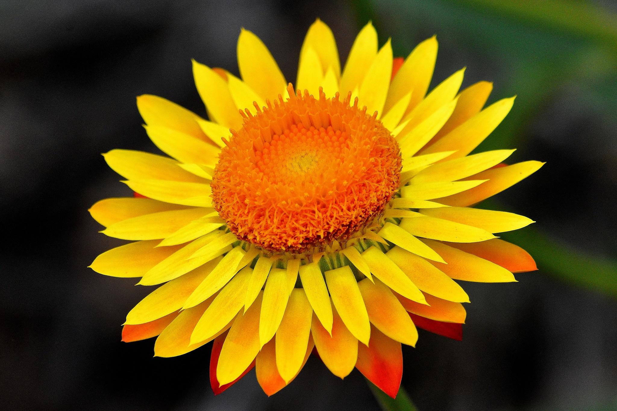 Very Yellow  by Henry Brosius
