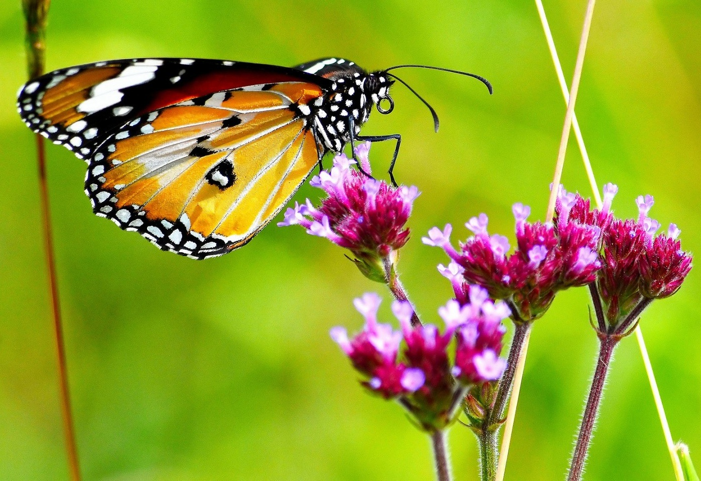 Autumn Butterfly  by Henry Brosius