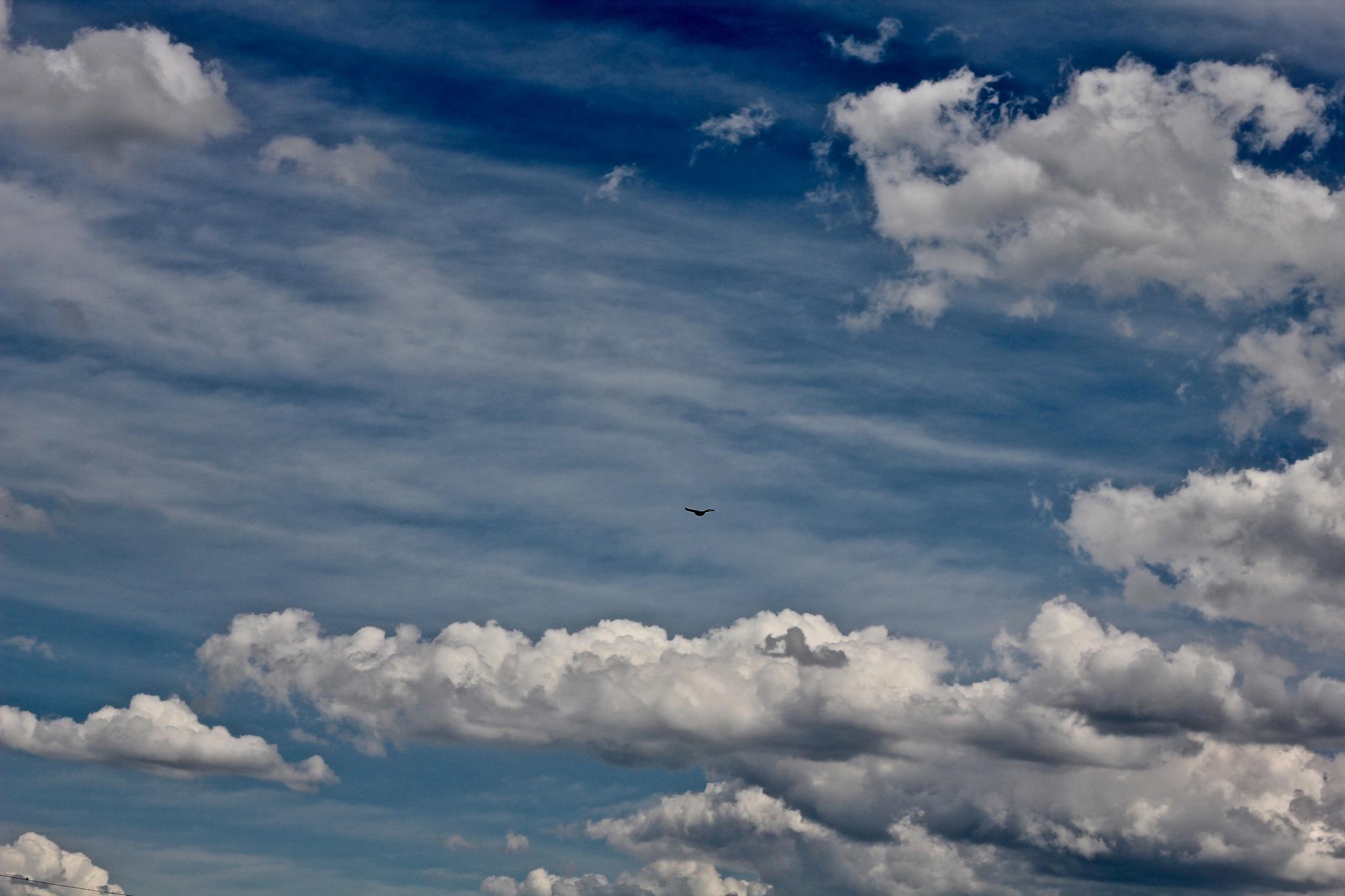 Fly by KimDonavan