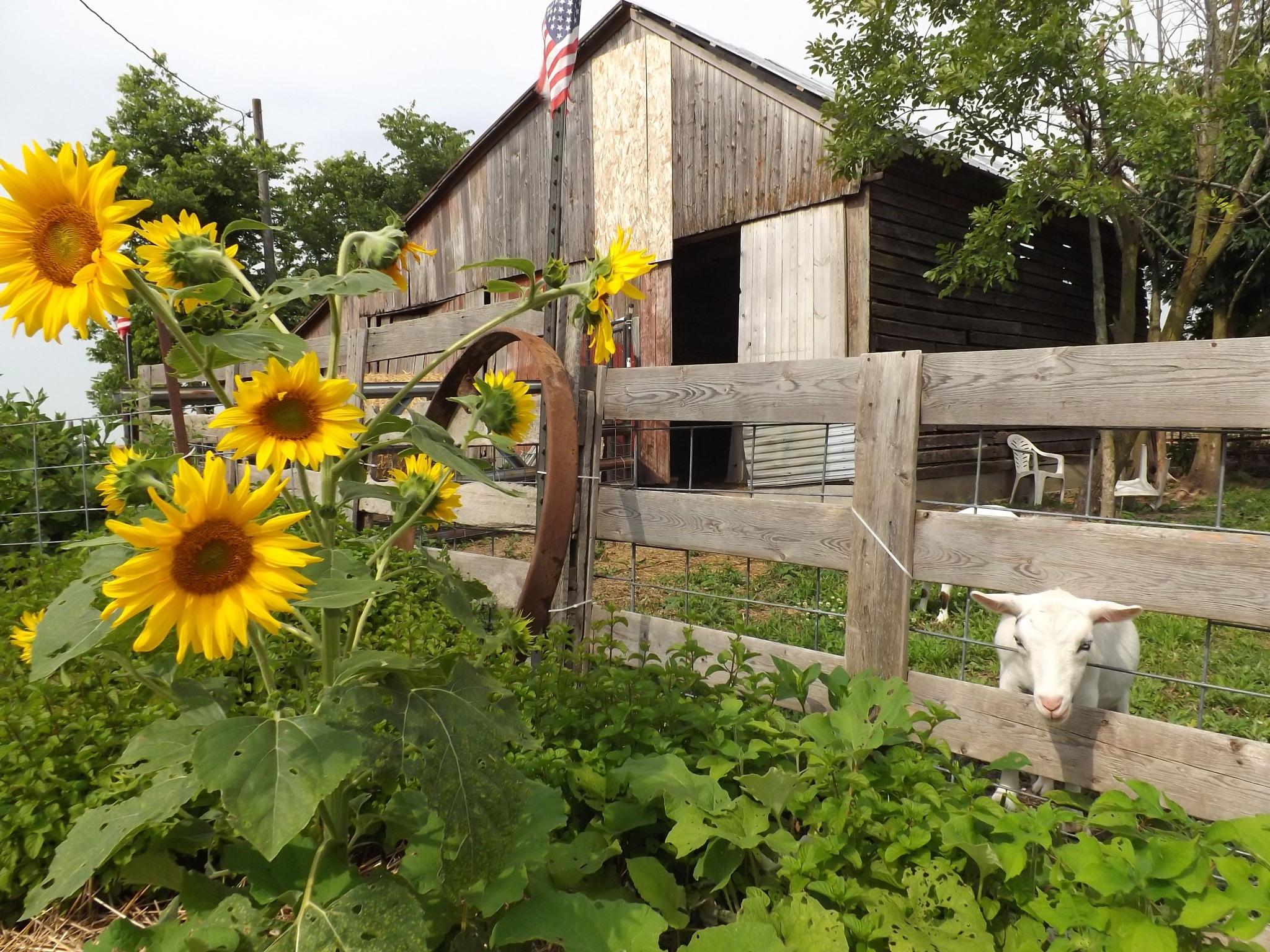 Home on the Farm by KimDonavan