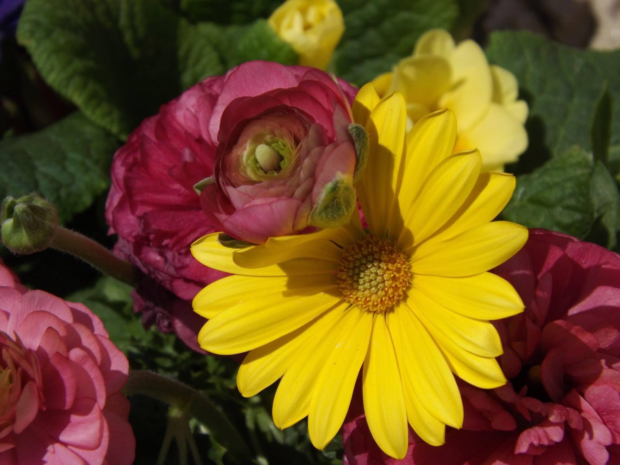 Springtime flowers by KimDonavan