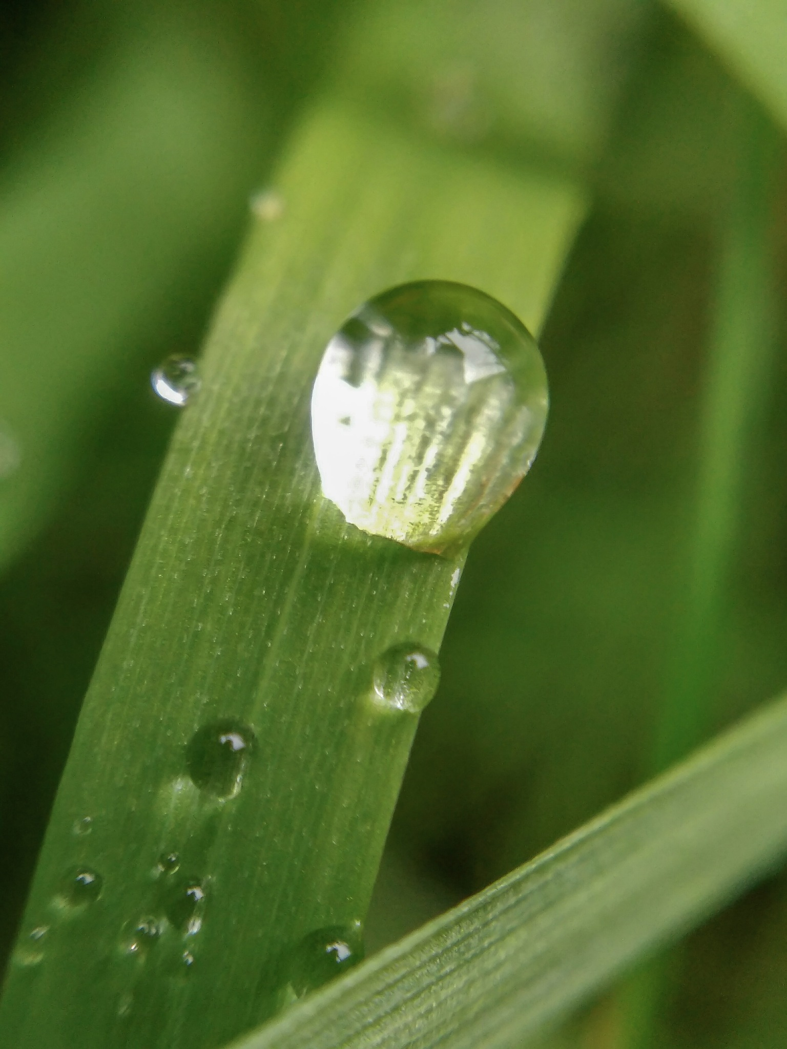 Rain drops by Kathleen Velten
