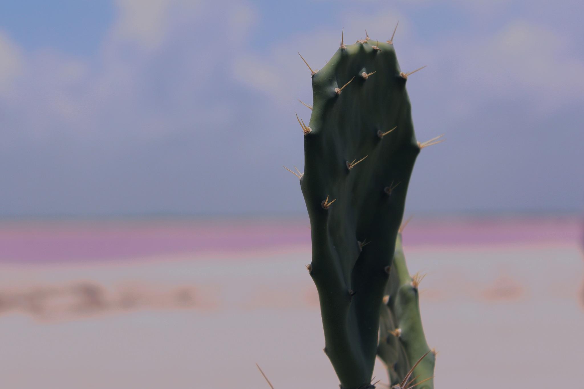 Green & Pink by memosp08
