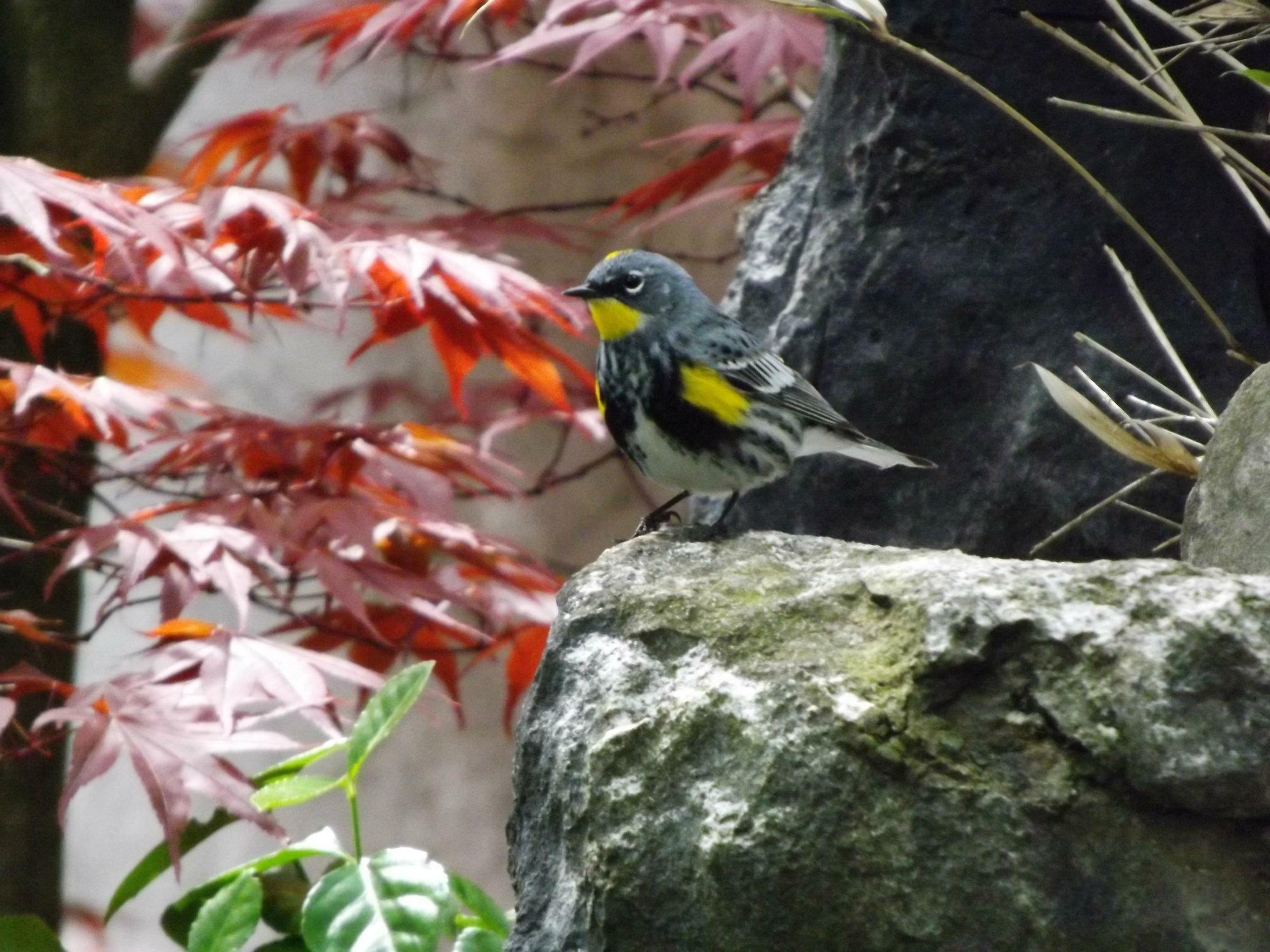 Bird is the word by Nasim Rizvi