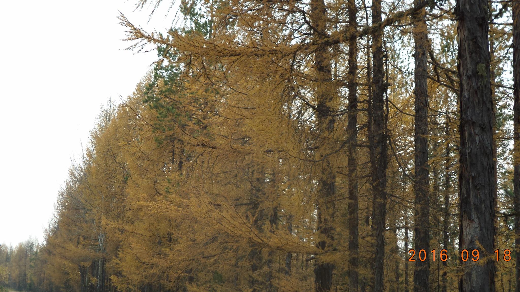 forest road by Anzhelika Struchkova