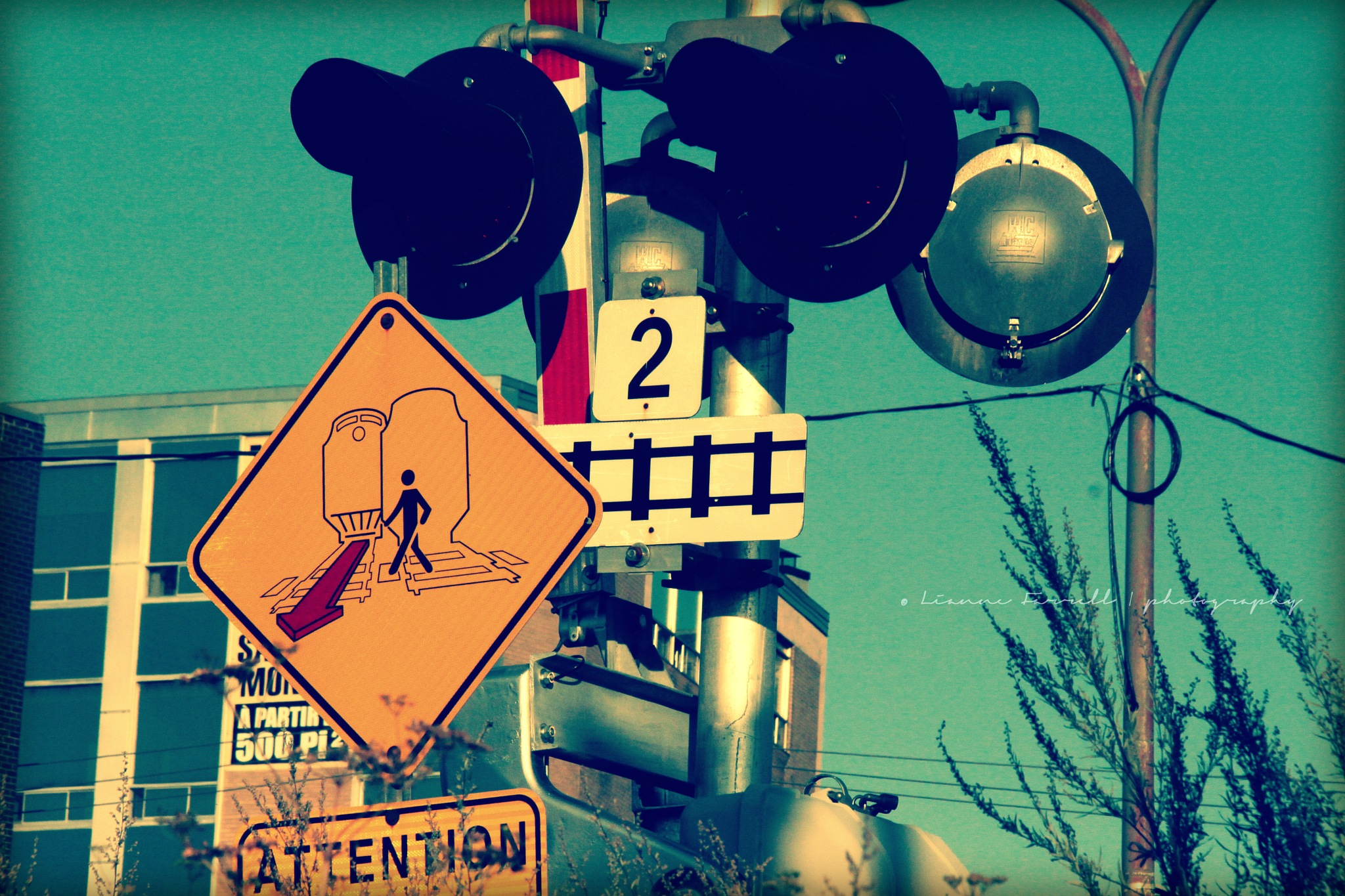ATTENTION! Bruno Mars Crossing by candid'Li