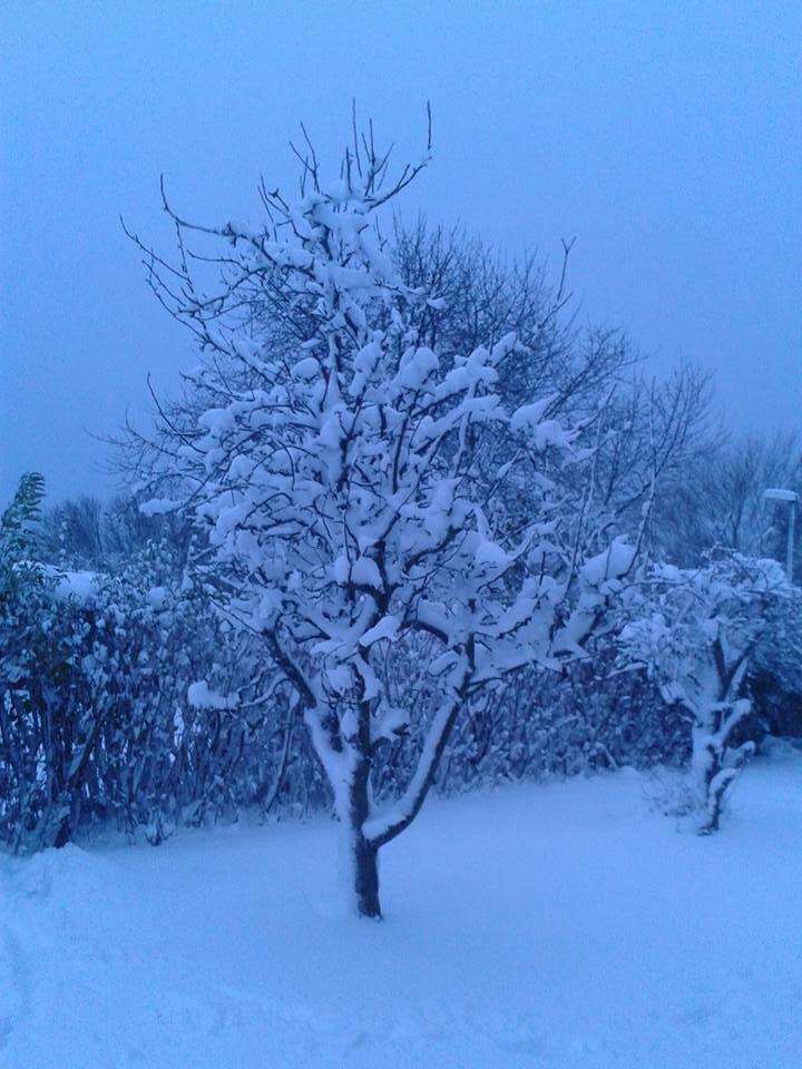 Winter guarden  by Daniel Svensson