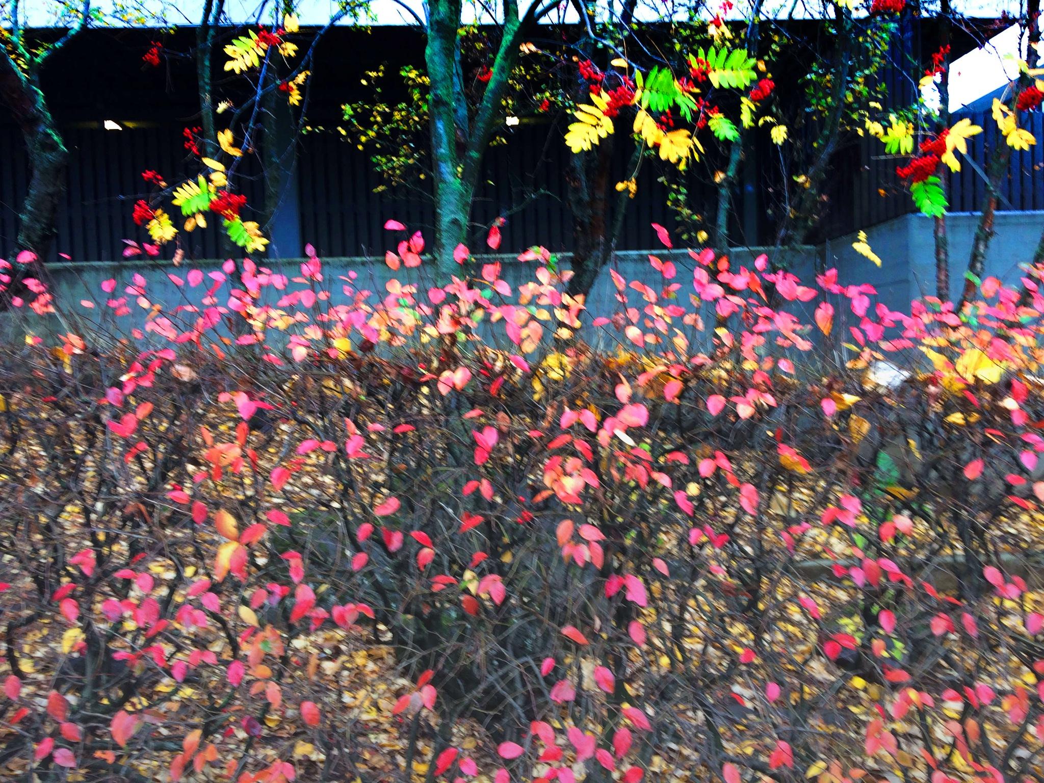 Fall leave. by Dadi Gudbjornsson