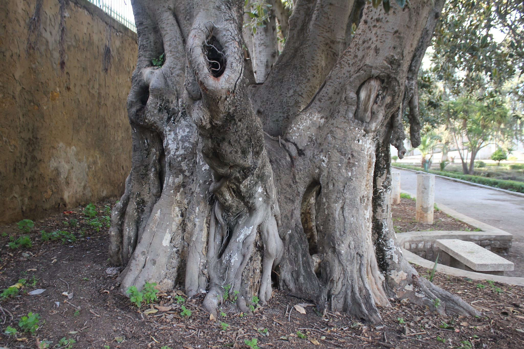 Les vieux arbres by ms timicha