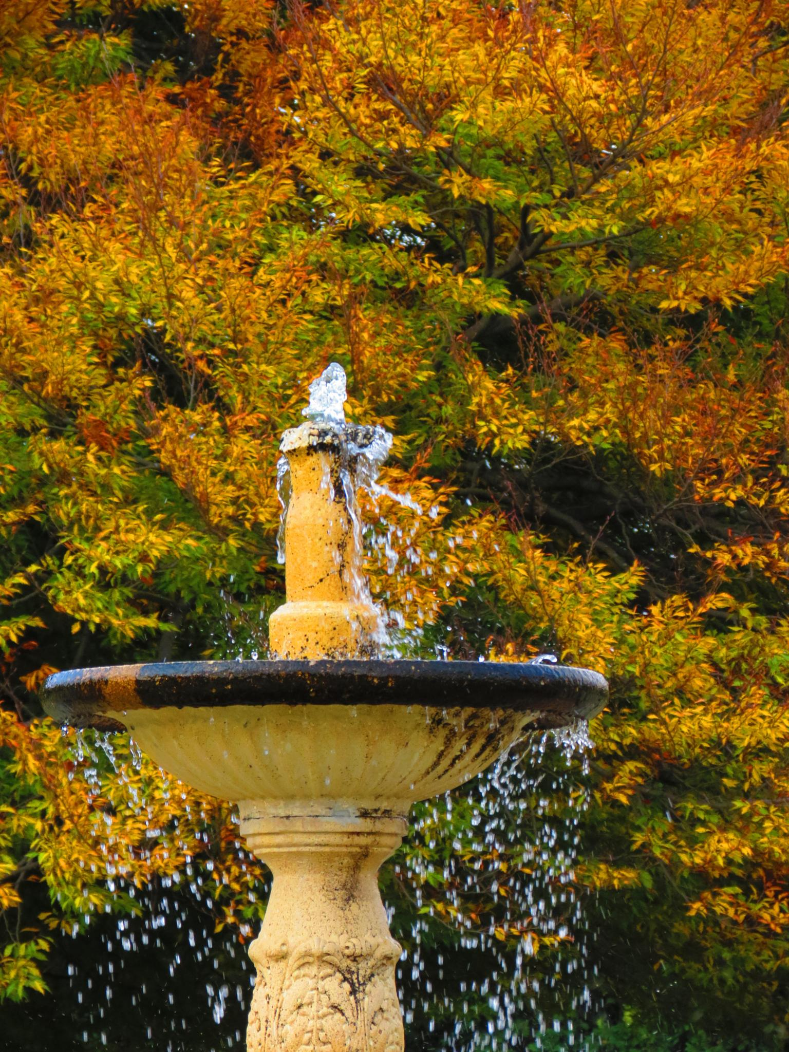 Fountain in the Fall by sweiland
