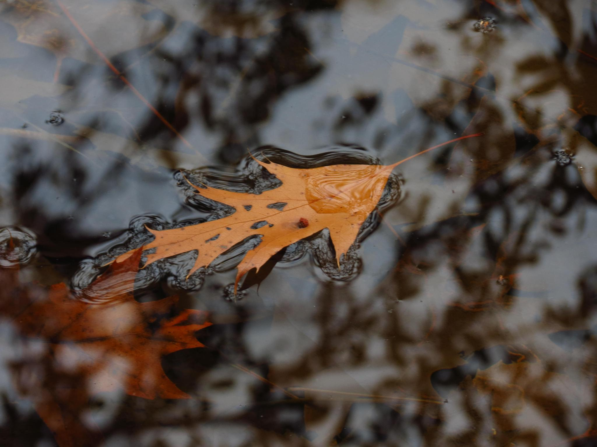 Floater by sweiland