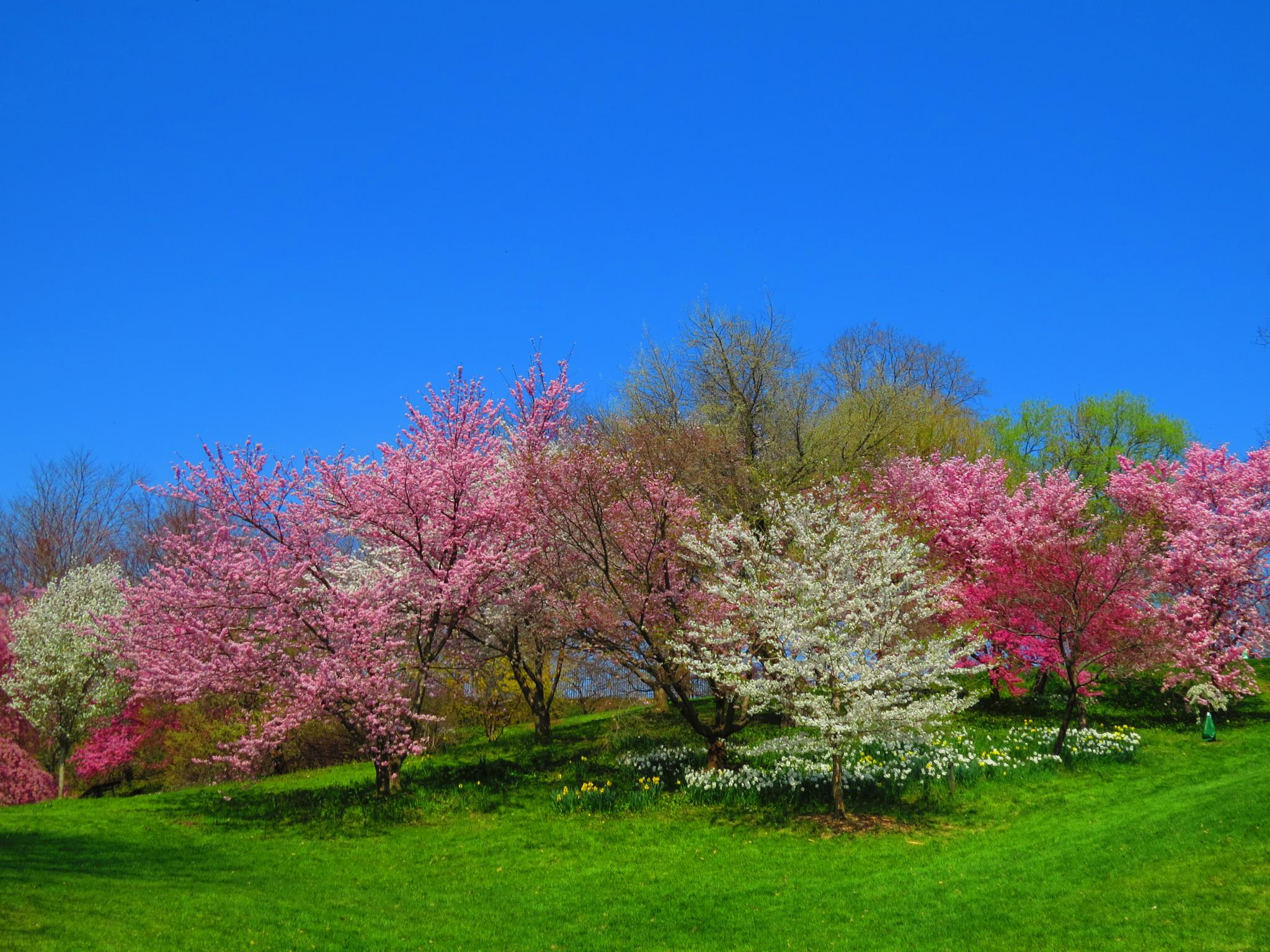 Highland Park in bloom by sweiland