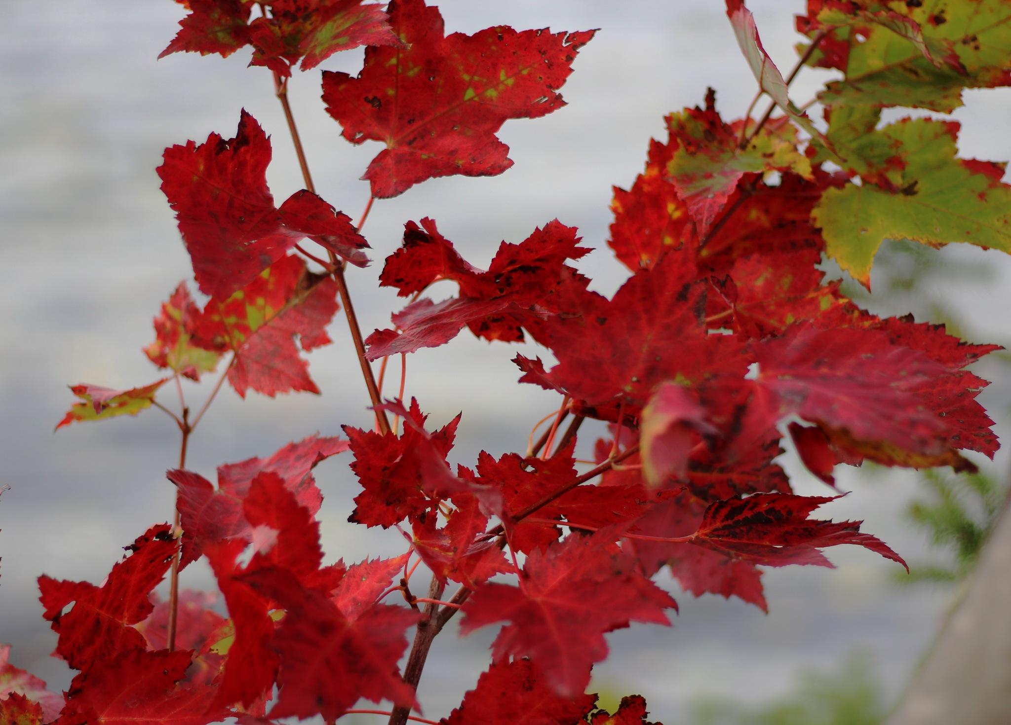 Leaves by ShutterDot
