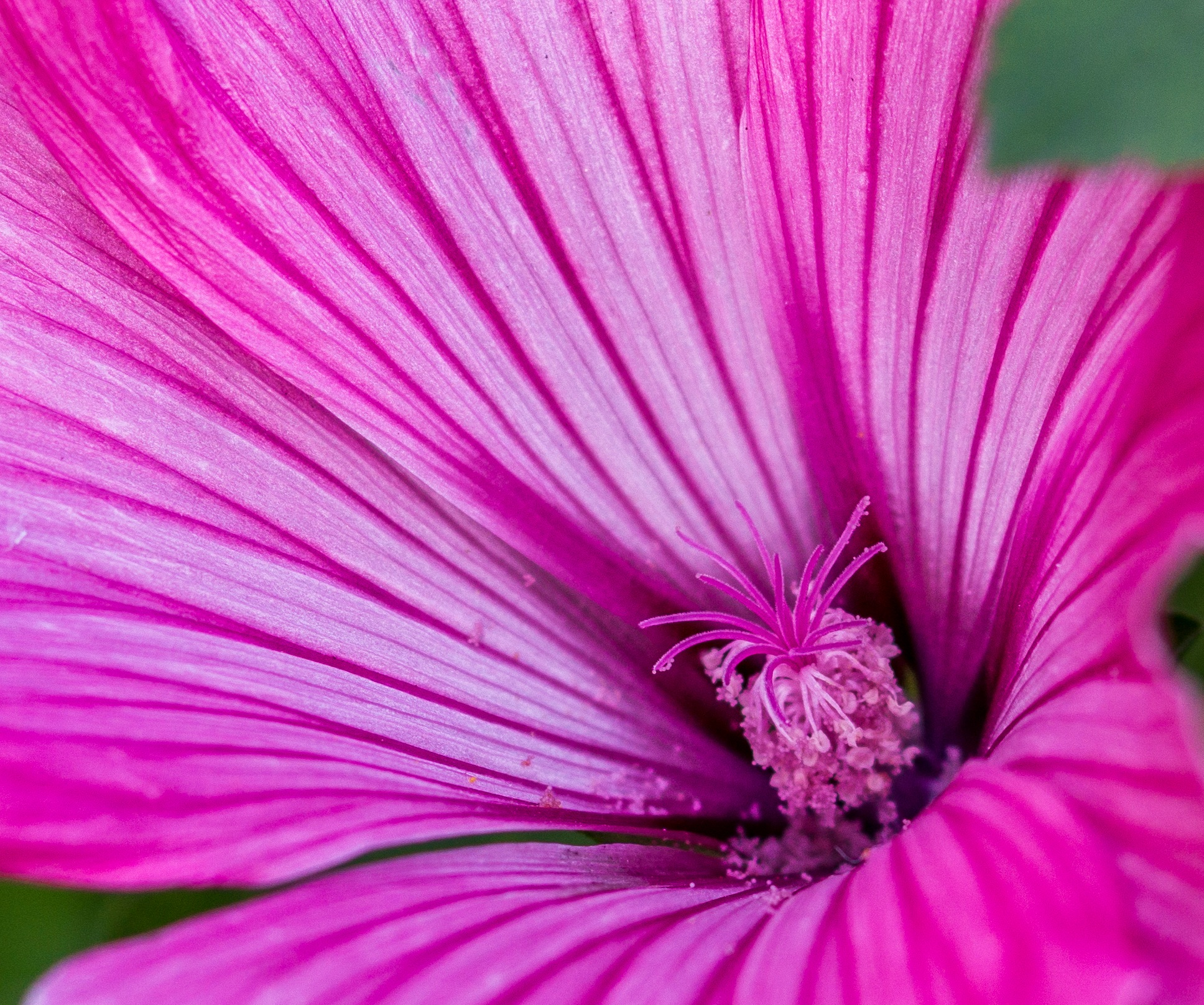 Heart of flower by Nemanja Raskovic