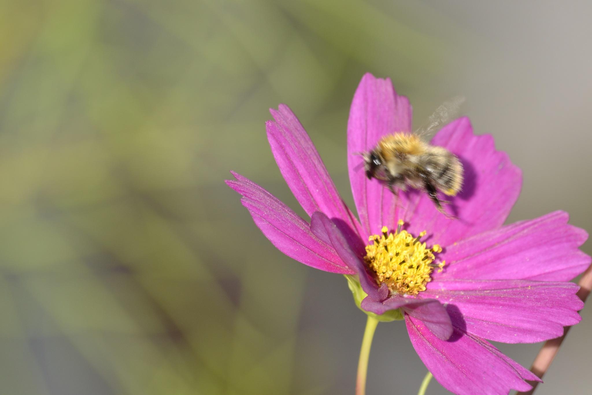 Working bee by SandrasPhotoworld