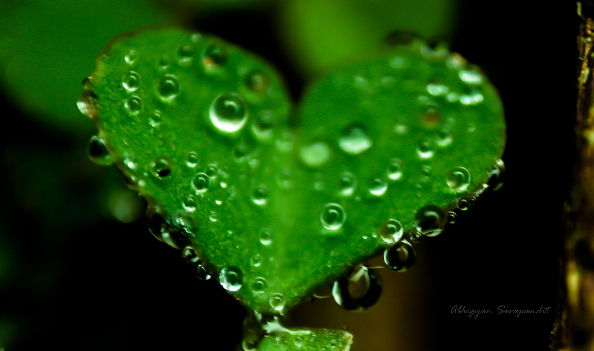 dew drops of spring by AbhigyanSavapandit