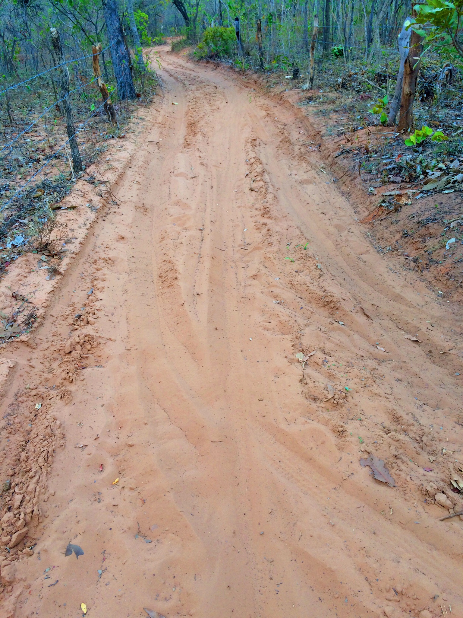 Sand road  by vitorlpb