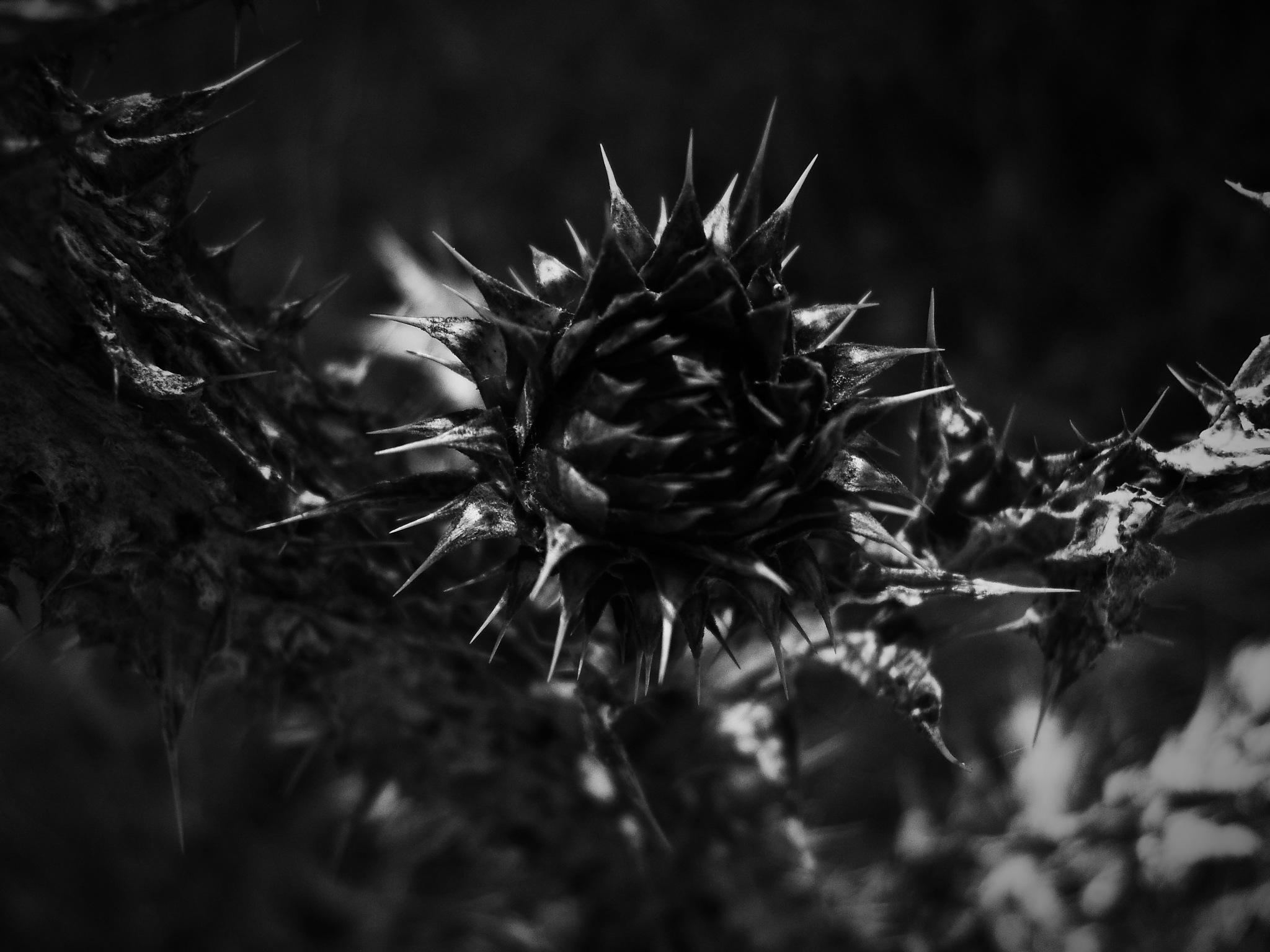 Untitled by sunnydreams7